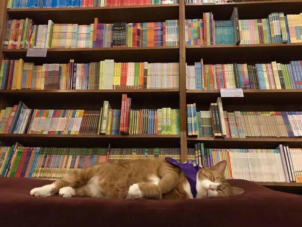 cat sleeping in front of bookshelf full of books